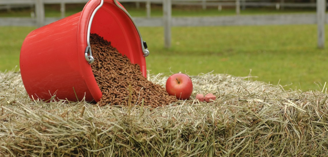 Help Sick Horses Heal with Nutrition